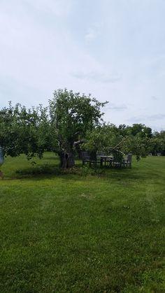 Nashoba Valley Winery - table under the apple tree