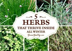 Grow Herbs Indoors – 5 Herbs That Thrive Inside All Winter