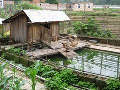 Duck pond and garden