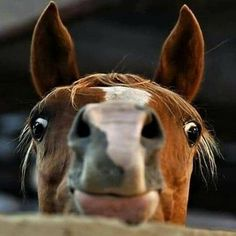Animal Memes, Cute Animals, Horses, Bees, Pretty Animals, Cutest Animals, Cute Funny Animals, Horse, Animal