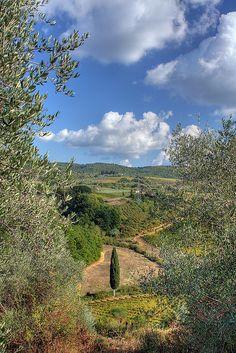 Chianti, Province of Siena, Tuscany region itly