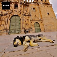 A dog sleeping in Cusco, Peru