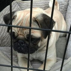 Flashback: The first time I saw Rosy at the rescue event to take her home! She was so small I couldn't find her at first!