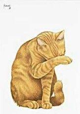Postkaarten    Joris wast zich    Francien Westering, van    C9354    Katten (Rood), Postkaarten, Tekeningen,