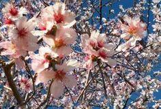Chaos: Comincia la primavera con un giorno di anticipo