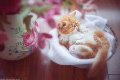 Beautiful cat images Beautiful Cat Images, Cats, Animals, Gatos, Animales, Kitty Cats, Animaux, Cat, Animal