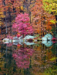 Tree and Rock Reflection
