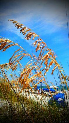 Visitor photo of Treasure Island, FL Visit Florida, Palm Beach County, Back Road, Treasure Island, Sunshine State, Tampa Bay, Dream Vacations, Spring Break, Roads