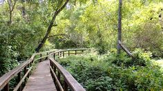 San Simeon Creek Trail in San Simeon California makes for a great hike. Find more trails in the area at www.SLOhike.com