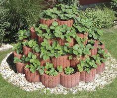 Výstavba jahodovej pyramídy o priemere m Garden Deco, Balcony Garden, Home Vegetable Garden Design, Garden Planter Boxes, Strawberry Planters, Container Flowers, Fruit Garden, Garden Styles, Garden Planning