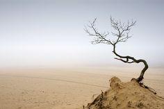 Nationaal Park Loonse en Drunense Duinen in de mist