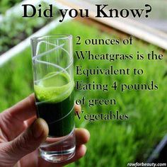 Health Tips-Benefits of Wheatgrass-Green Vegetables **is this true? I need to be growing wheat grass! Healthy Drinks, Healthy Tips, Healthy Choices, Happy Healthy, Healthy Food, Raw Food, Healthy Weight, Healthy Skin, Food Food