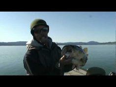 IRod bass fishing on Clearlake with Paul Bailey