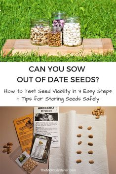 Find out if your seeds are still alive; the best time to sow seeds to check germination rates; an easy 3 Step Test to calculate seed viability and how to store seeds to maximise life. How To Store Seeds, Buy Seeds, Organic Gardening, Gardening Tips, Sustainable Gardening, Urban Gardening, Seed Raising, Seed Storage, Seed Germination