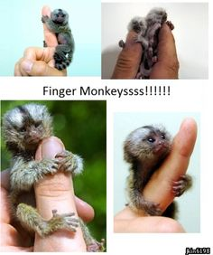 Cute monkeys are cute