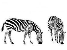 herd of zebras clipart - Google Search Zebra Clipart, Giraffe, Elephant, Zebras, Polar Bear, Sheep, Clip Art, Horses, Cats