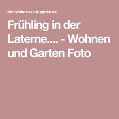 Frühling in der Laterne.... - Wohnen und Garten Foto Mini, Pictures, Love Girlfriend