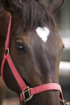 So pretty horse with a white heart, what can be more cute? ~ Flirt.com  #flirt #flirtcom #heart #horse