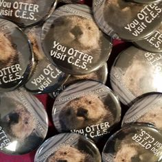 You really otter drop by the CES Weekly Table in the SUB today to start your collection of career animal pins & stickers. New animals each week! #careeranimals