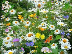 http://israelnewstalkradio.com/wp-content/uploads/2017/03/wild-flowers-67119_1920-1024x768.jpg