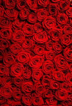 Red rose Backdrop,Wedding Photograpgy Backdrop,Valentine's Day prop Item D-1795