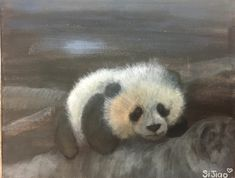 Panda Bear in acrylic by young student Si Jiao L. Buy Art Online, Original Art For Sale, Local Artists, Panda Bear, Art School, Art Gallery, Wildlife, Student, Portrait