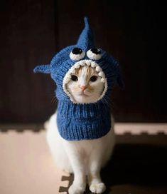 Humour : voici le bonnet pour chat du collectif France Tricot... Très drôle !!!