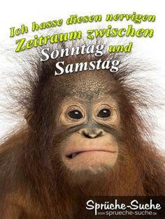 Spruchbild mit böse guckenden Affen