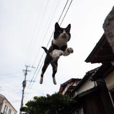 猫好きの人達の間で話題になっている、空飛ぶ猫の写真。 猫ならではの跳躍力でジャンプする姿が素敵な風景に溶け込むと、まるで本当に空を飛んでいるみたい。 そんな決定的な瞬間をおさめた、空飛ぶ猫写真を集めてみました。 それでは、躍動感あふれる猫たちの姿をどうぞ♪♪