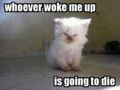 Cat Kitten Kitty Sleep Awake Funny Animals