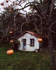 🍁Lucy 🍁CT 🍁Autumn and Halloween everything Fall Inspiration, Autumn Cozy, Autumn Fall, Autumn House, Autumn Aesthetic, Seasons Of The Year, All Nature, Hello Autumn, Samhain
