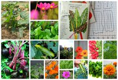 16 Ridiculously easy seeds to plant in your first garden - A Magical Life Organic Gardening, Gardening Tips, Vegetable Gardening, Garden Compost, Herb Seeds, Seed Starting, Organic Vegetables, Container Gardening, Garden Landscaping