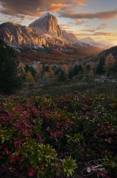 Reversal - This is another photo take during my last trip on Dolomiti in autumn.. the mountain in the background is the Tofana and i was realy captured by the beautiful leafs under my feet. these are blueberries , and in autumn, they takes amazing colors. this is a Focus prospective blend , used for combine the beautiful foreground with the imposing view of the mountain in the background!! If you like my works leave a like and contact me for lesson of Photoshop , Prints and Ws on-field And…