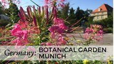 Botanical gardens are beautiful places. This video will show you the lovely garden in the Bavarian capital. It is located near the Nymphenburg Castle in the . Munich, Botanical Gardens, Family Travel, Travel Inspiration, Beautiful Places, Castle, Germany, Videos, Plants