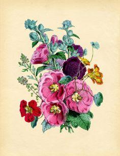 Vintage Instant Art Printable - Hollyhocks - The Graphics Fairy
