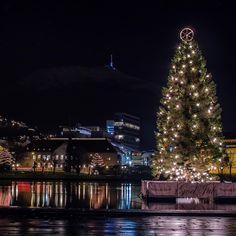 Festplassen in Bergen, the big Christmas tree on Lillelungårdsvannet - photo by Steve Snoots