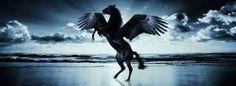 . Whale, Bird, Animals, Whales, Animaux, Birds, Animal, Animales, Animais