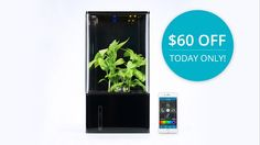 EcoQube Air - The Coolest Desktop Greenhouse Ever project video thumbnail