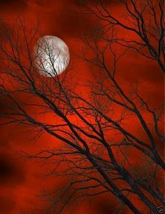 Beautiful moon and Red sky