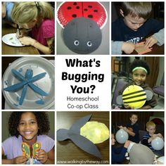 Homeschool Co-op Class on Insects (grades K-3)
