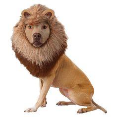 Lion Pet Costume - M : Target