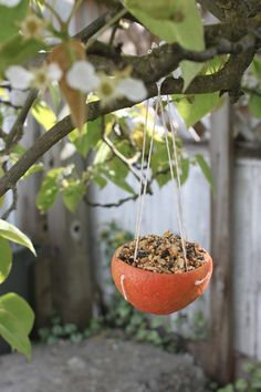 Fun Outdoor Crafts for Kids: Citrus Cup Bird Feeder