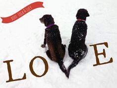 Happy Valentine's Day from Lola & Lucy! Chocolate Lab love in the snow. WearWagRepeat.com