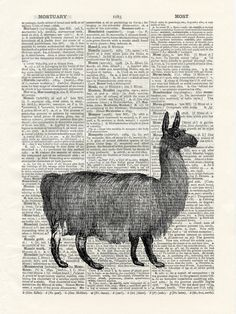 Vintage Llama Illustration  - vintage image printed on a page from an early 1900s Dictionary Buy 3 get 1 FREE. $10.00, via Etsy. creepy looking llama, but we could make our own with a stamp?