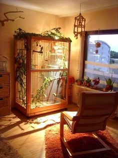 Excellent indoor aviary #howtobuildanaviary