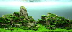Verry nice aquascape.