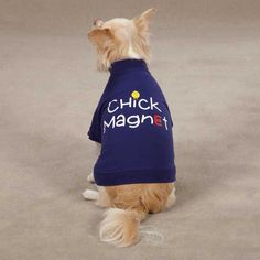 The Chick Magnet Dog T-Shirt in blue adds a little attitude to any dog's wardrobe! This hilarious poly/cotton t-shirt for dogs features a screen printed chick and magnet saying on the back. This easy-fit pullover boasts a high-cut, stay-dry belly and is machine-washable.