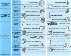 Index fossil dating method 9