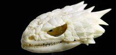 armadillo lizard skull