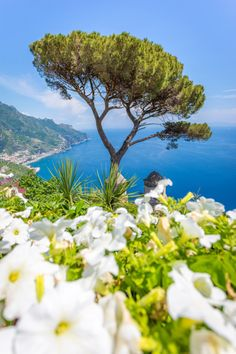 View of the coastline from Villa Rufolo -  Ravello, Amalfi Coast, Sorrento, Italy